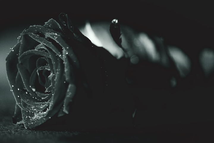 Meaning of Black Rose