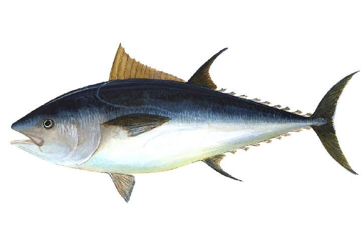 tuna fish - Mediterranean Diet